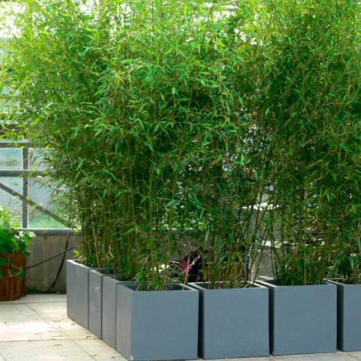 Raumteiler Bambus M Im Grauen Kubus